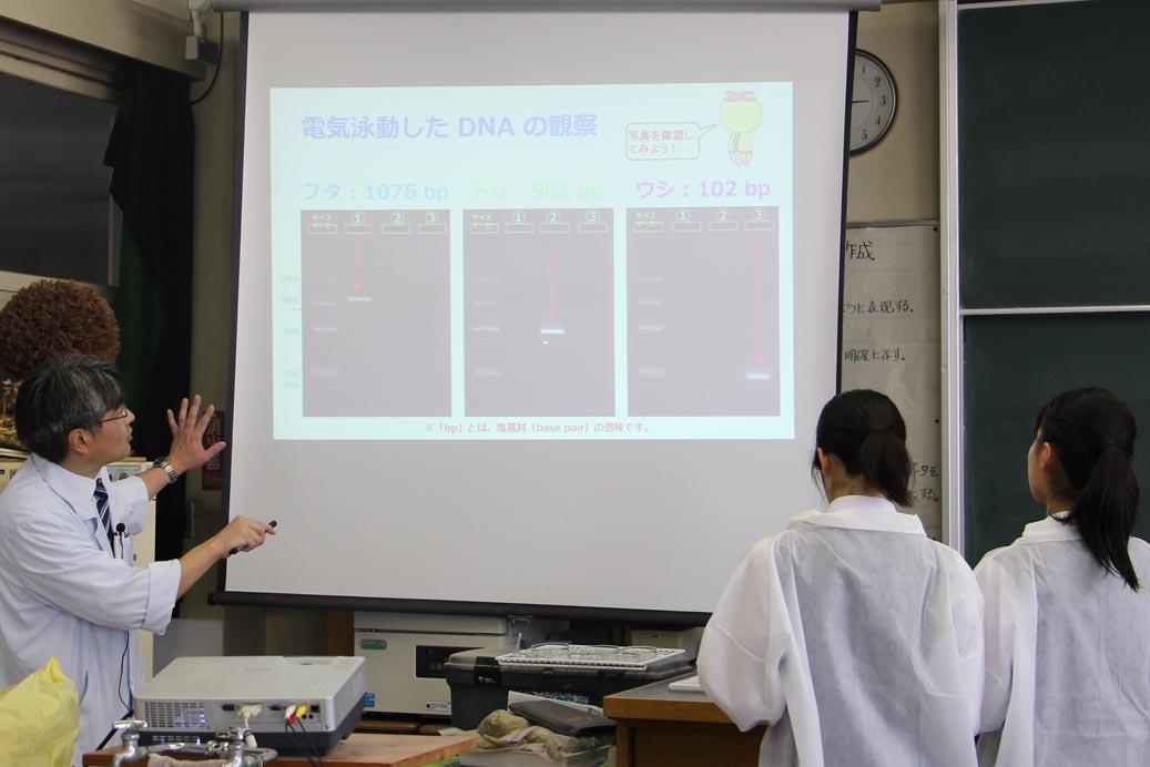 DNA出前講座@千葉県立船橋芝山高等学校