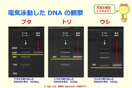 DNA出前講座